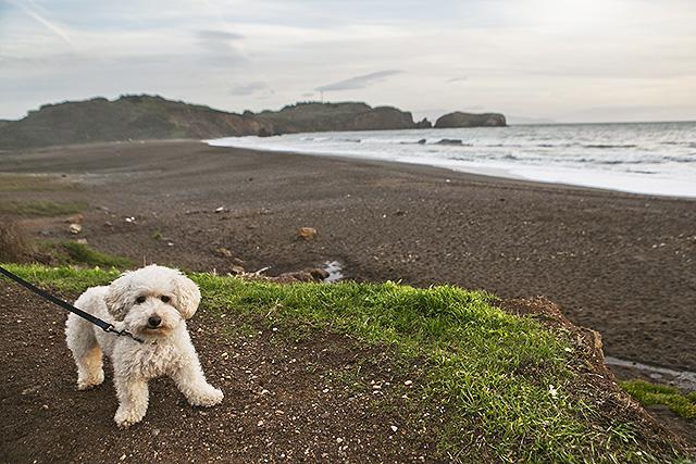sf_beach3
