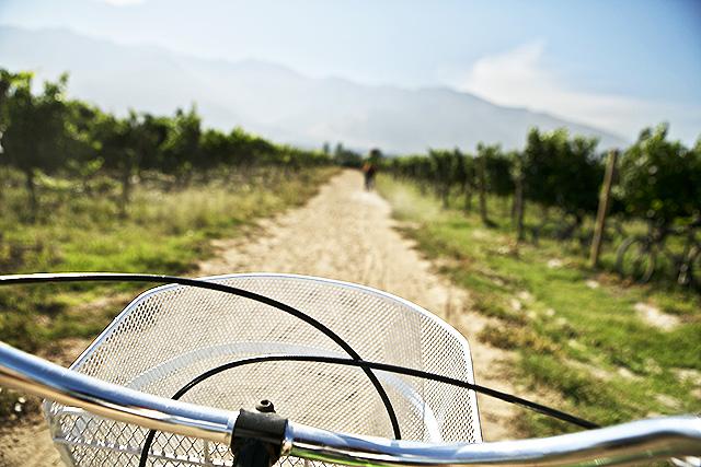 cykelvin2