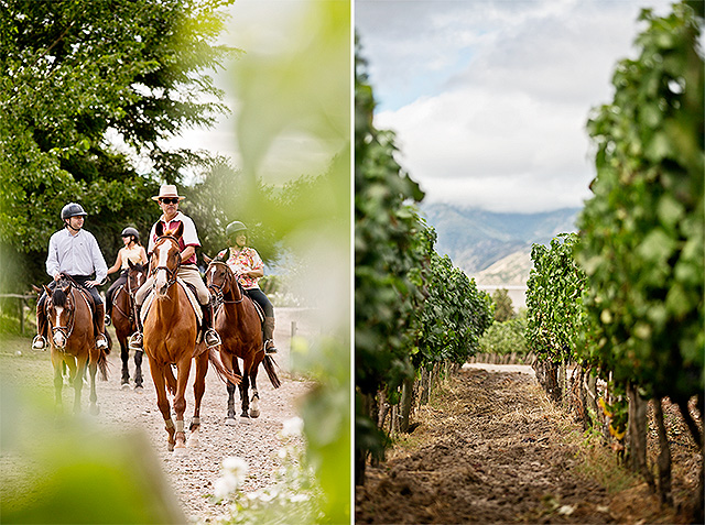 horse_wine1