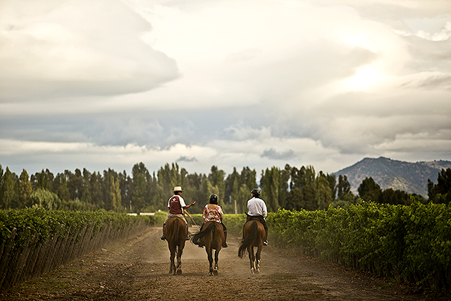 horse_wine2