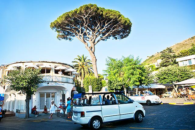 capri_tree