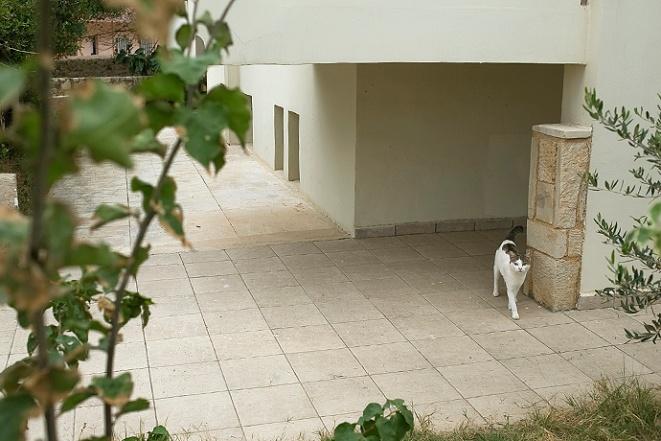 kreta katt 01