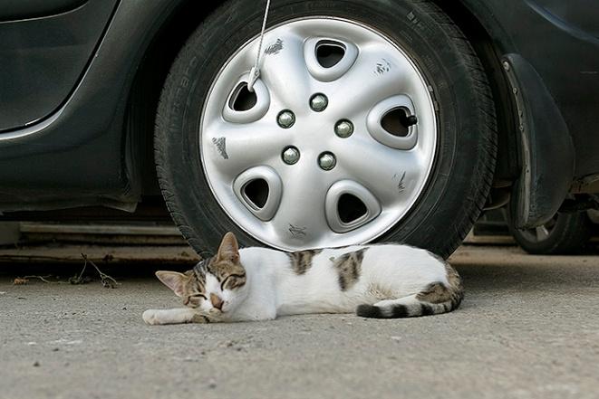 kreta katt 03