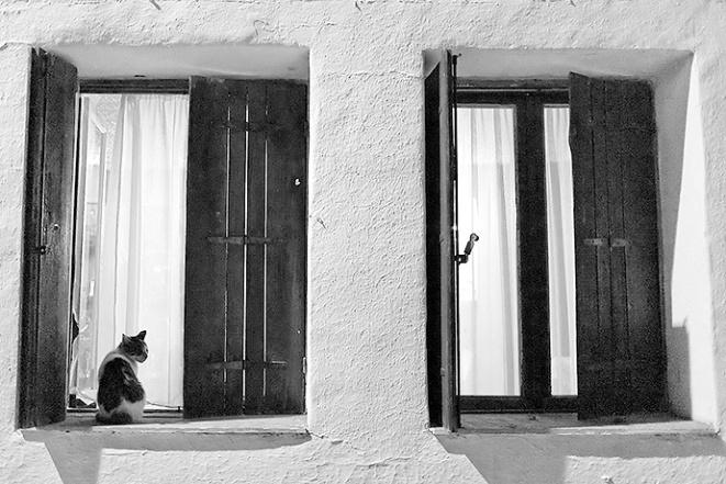 kreta katt 05